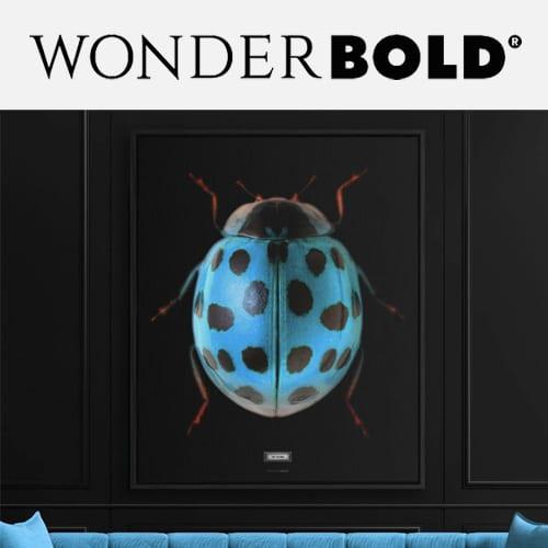 Wonderbold