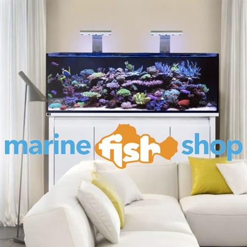 Marine fish Shop website designer